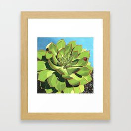 Aeonium Framed Art Print