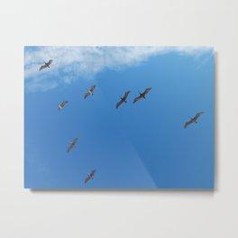 Pelican formation Metal Print