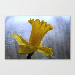 Daffodil on a Grey Day Canvas Print