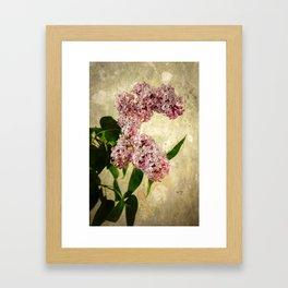 Vintage Lilacs in Bloom Framed Art Print
