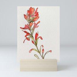 Indian Paintbrush II Mini Art Print
