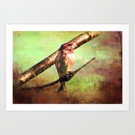 Finch Songbird on Cherry Tree Burl ~ Ginkelmier Inspired Art Print