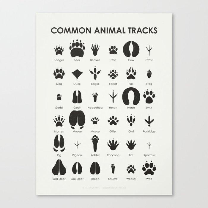 Common Animal Tracks Leinwanddruck