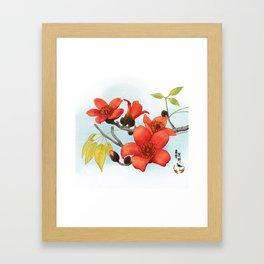 Tree Cotton Flower (Common Bombax) Framed Art Print