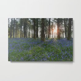 Sunlit Bluebell Woods Metal Print
