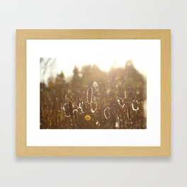 fall bullrush Framed Art Print