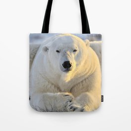Majestic Giant Adult Polar Ice Bear Sitting On Cold Ground Close Up Ultra HD Tote Bag