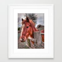 pony Framed Art Prints featuring Pony  by Darren Wilkes Fine Art Images