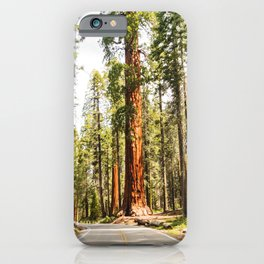 sequoia tree iPhone Case