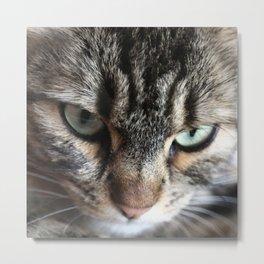 cats square o1 Metal Print