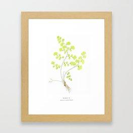 Maidenhair Fern Framed Art Print
