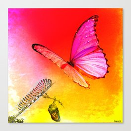 The butterfly, the caterpillar and the chrysalis Canvas Print