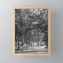 Black-and-White Woods Framed Mini Art Print