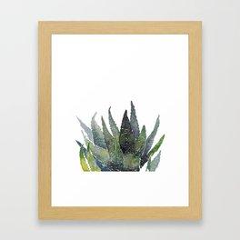 Zebra succulent Framed Art Print