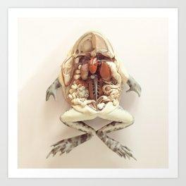 The Anatomical Frog Art Print