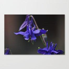 Purpura Canvas Print
