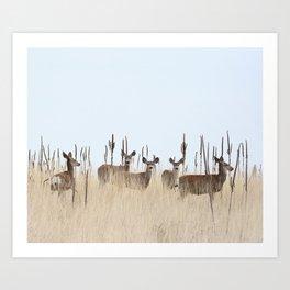 Deer In A Field of Grass Art Print