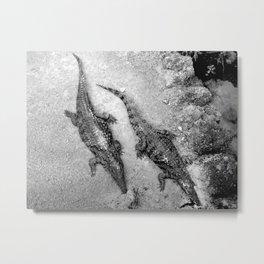 Aligators. Metal Print
