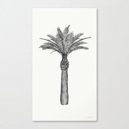 PALMAE Canvas Print