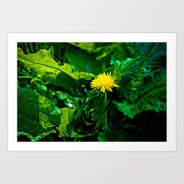 Yellow Dandelion Flower Art Print