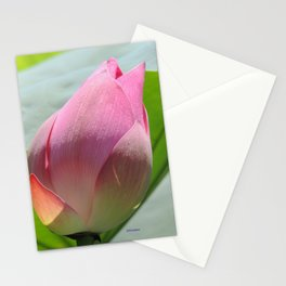 Lotus Bud in West Lake Stationery Cards