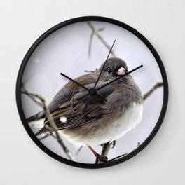 Dark Eyed Junco Wall Clock