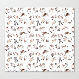 Tumbling guinea pigs Canvas Print