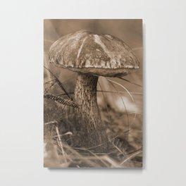 Russian brown cap boletus Metal Print