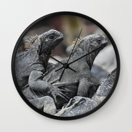 Three marine iguanas hanging out together Wall Clock