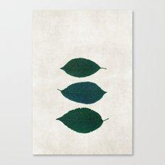 three of a kind 5 Canvas Print