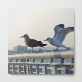 Ring-Billed Gulls at Dusk Metal Print