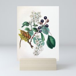 """The Bird Cherry, from """"The Spirit of the Woods,"""" 1849 (benefiting the Arbor Day Foundation) Mini Art Print"""