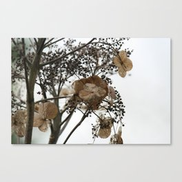 Shadows of Perfection, photograph of a withering flower Canvas Print