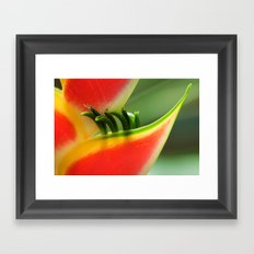 Exotic Flower - Heliconia 361 Framed Art Print