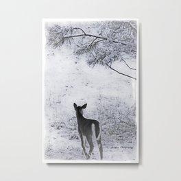 Winter Fawn Metal Print