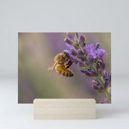Honeybee Having a Lavender Snack Mini Art Print