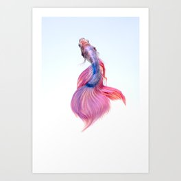 CLOSE UP - SIAMESE - FIGHTING FISH Art Print