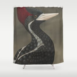 Ivory-billed Woodpecker (Campephilus principalis) Shower Curtain