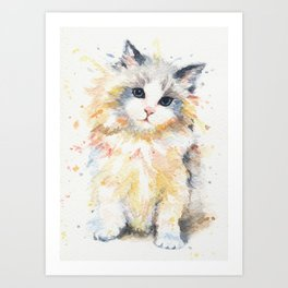 Blue-Gem Ragdoll Cat Art Print