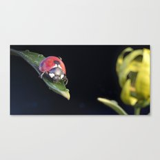 Ladybug Journey Canvas Print