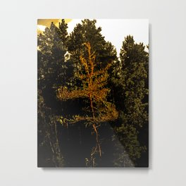Vor Prima Donna Metal Print