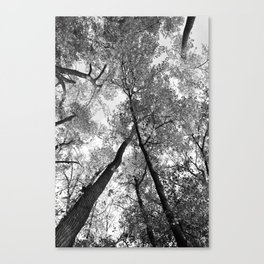 Looking Up in Black and White Canvas Print