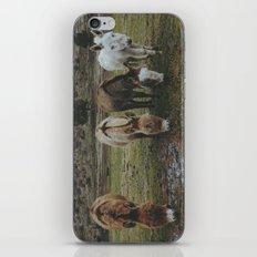 Miniature Donkeys iPhone & iPod Skin