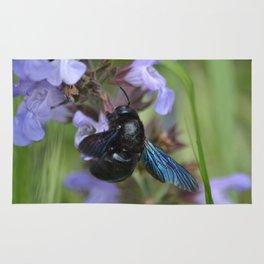 Xylocopa Violacea Rug