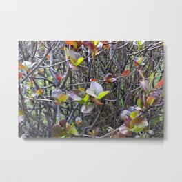 leaflets on twigs Metal Print