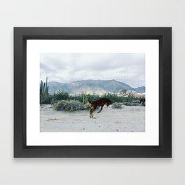 Bucking in Baja Framed Art Print