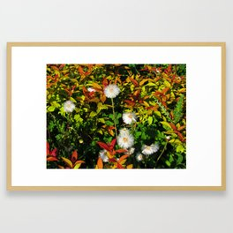 Summer in Canada Framed Art Print