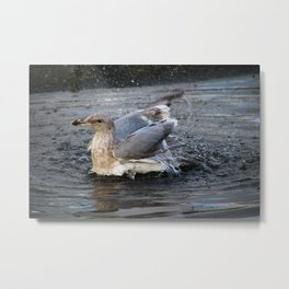 puddle bath Metal Print