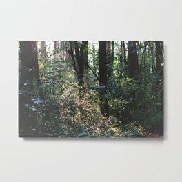 Forest Trail XVI Metal Print