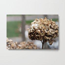 Death and Flowers Metal Print